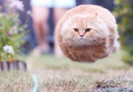 The hovercat is ready for takeoff.